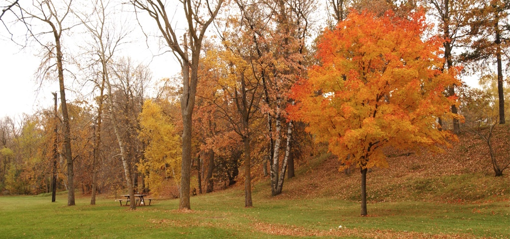 Home Page banner - fall trees